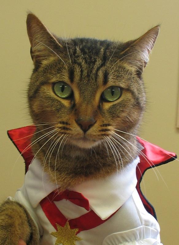 Clinck the cat in a dracula costume