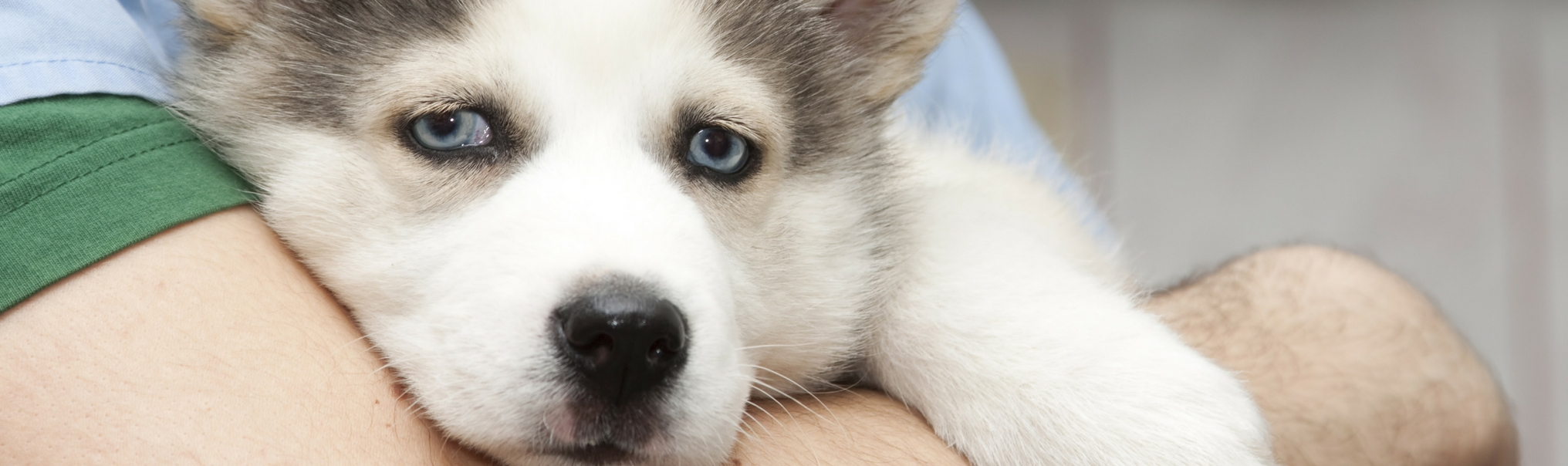 How Long Can A Dog Live With Testicular Cancer