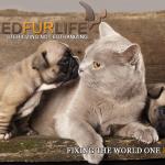 Fixed Fur Life