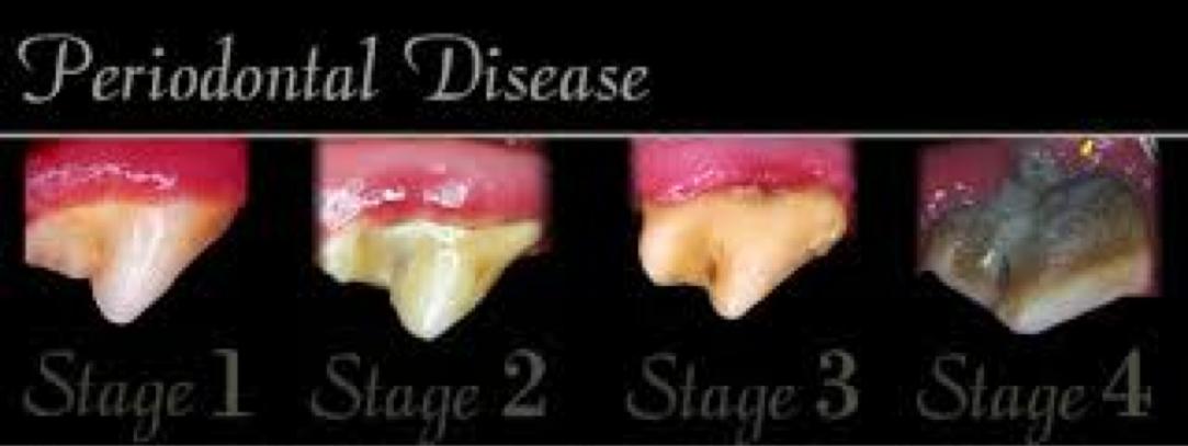 pet dental chart