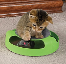 Toy Tips for Cats