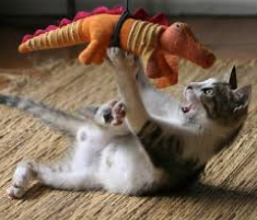 Tips to Keep Your Cat Active