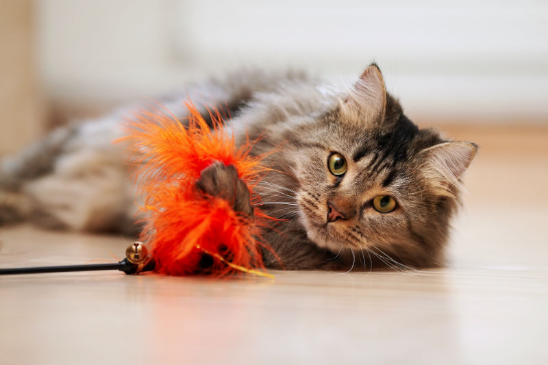 Tips for Keeping Your Indoor Cat Active