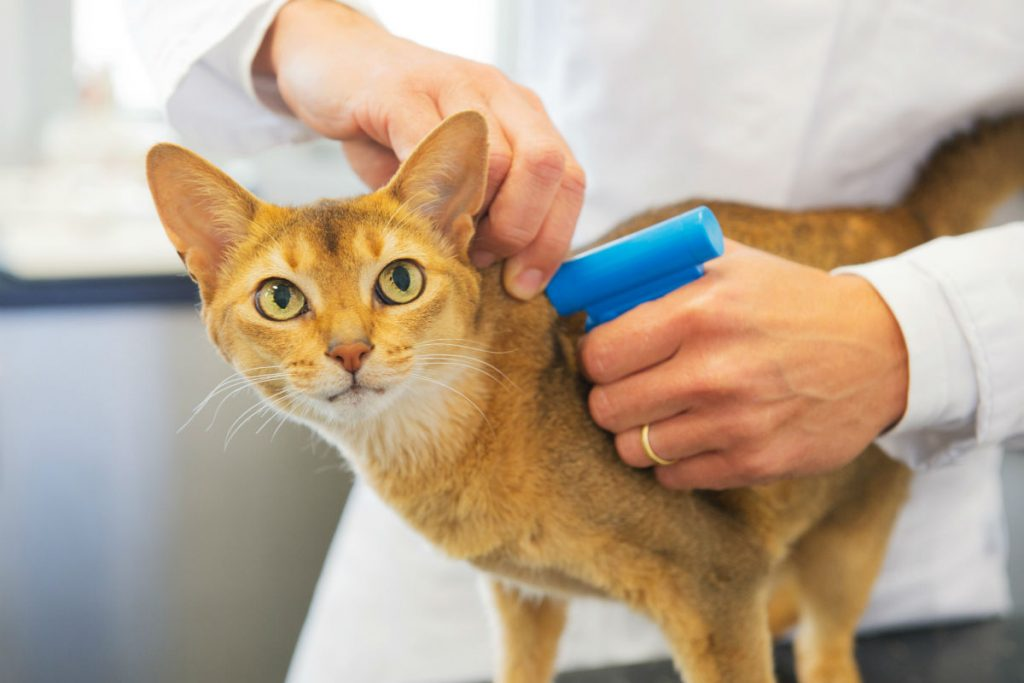 Cat getting a vaccine from a veterinarian