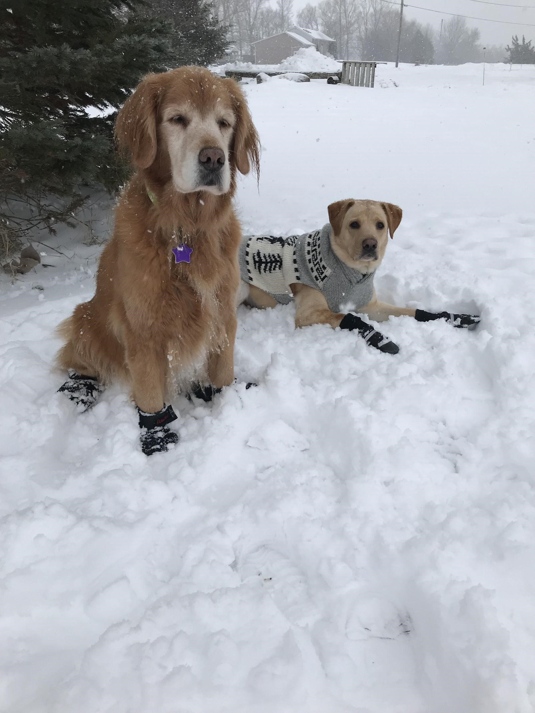 Two dogs sitting in snow